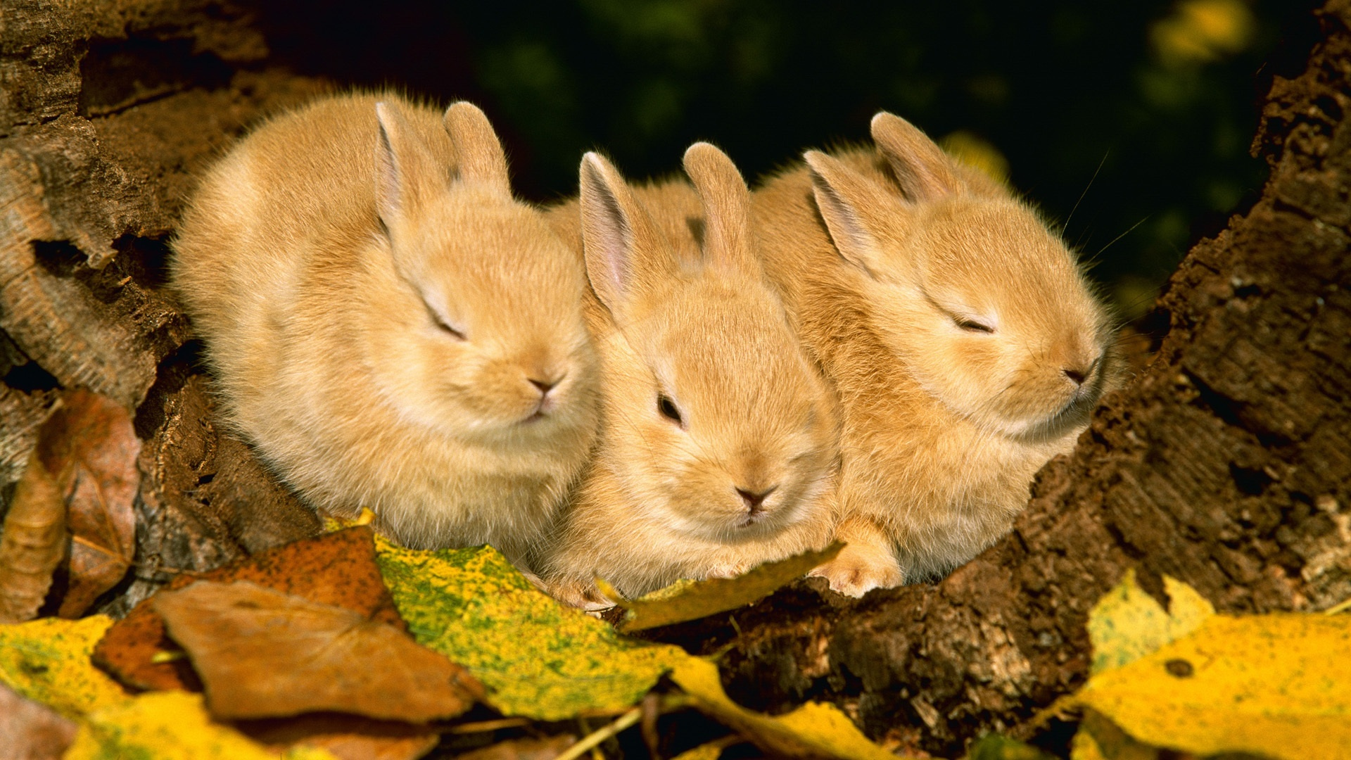 Rabbit HD Wallpapers | Backgrounds