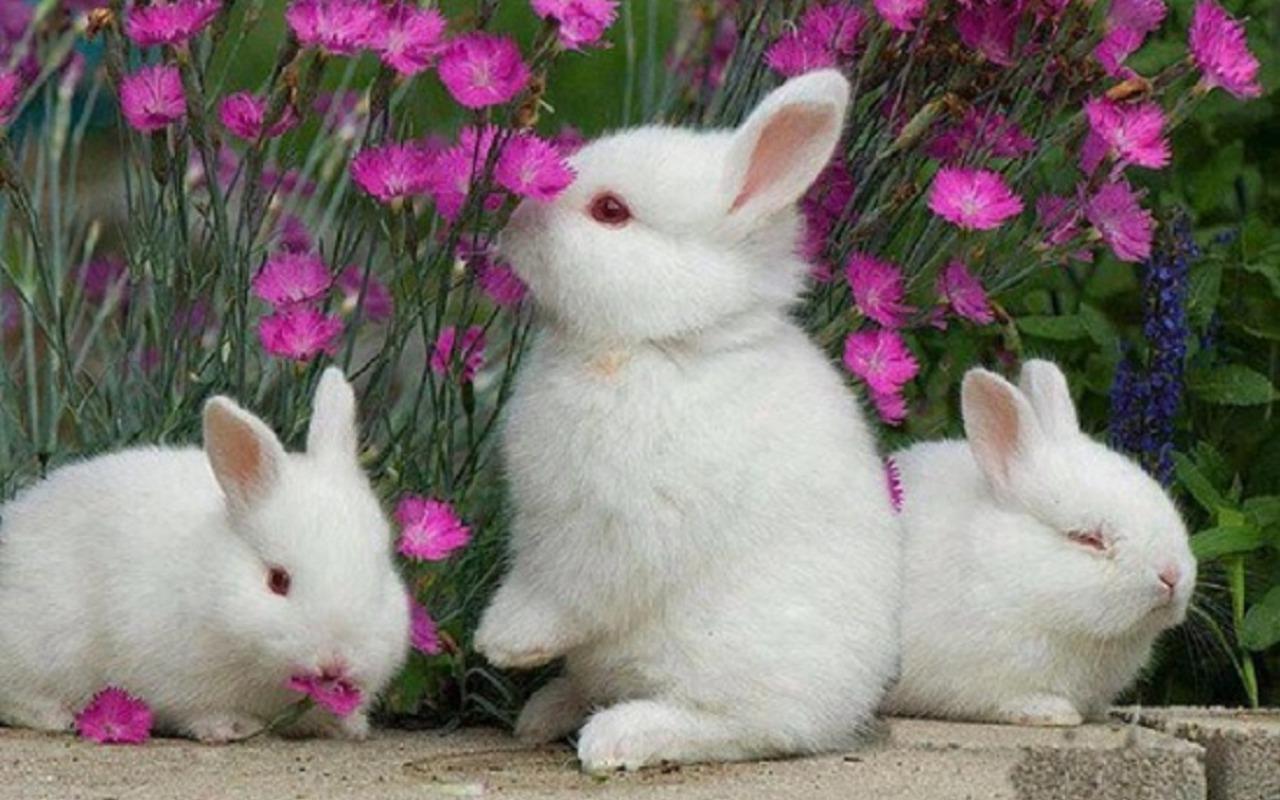 Rabbit Computer Wallpapers, Desktop Backgrounds | 1280x800 | ID:388431