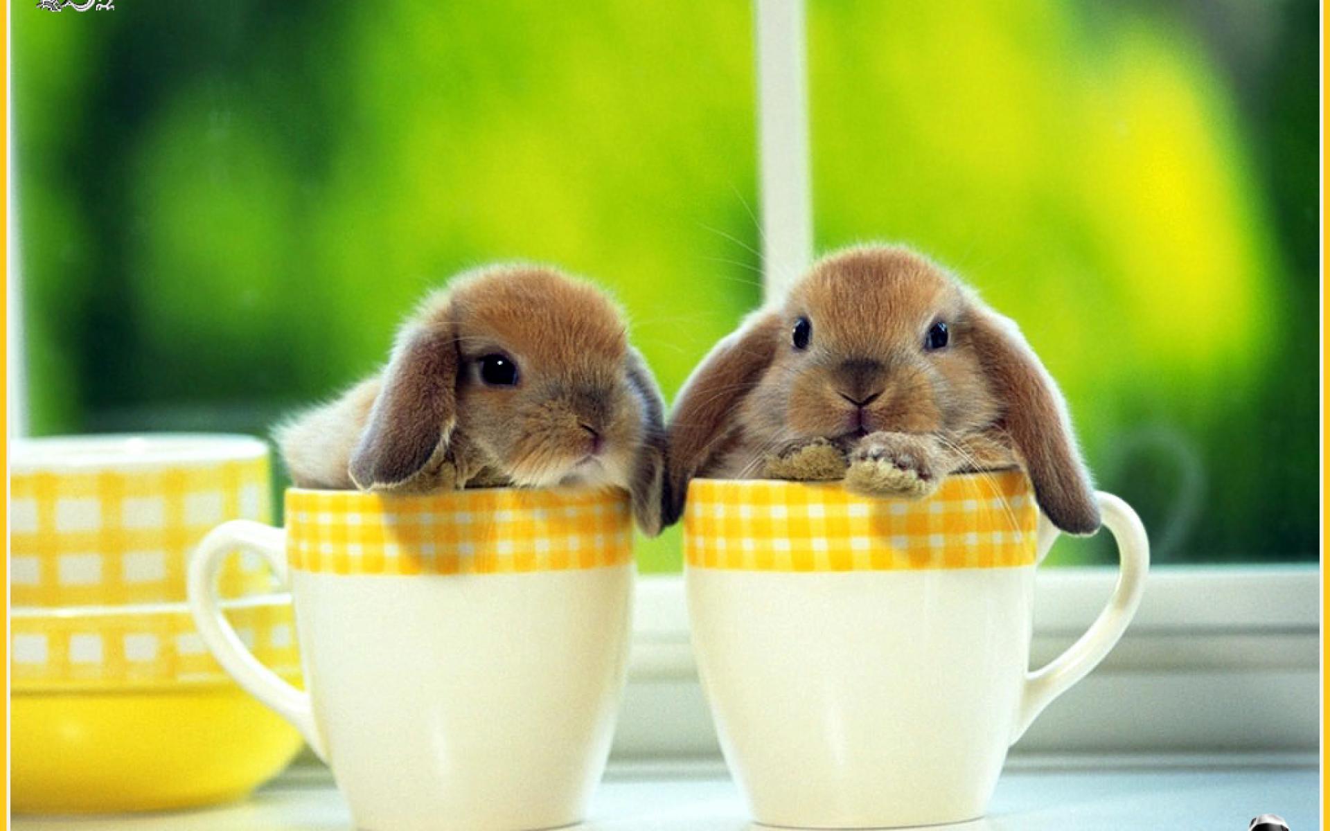 Rabbit Wallpapers - Wallpaper Cave