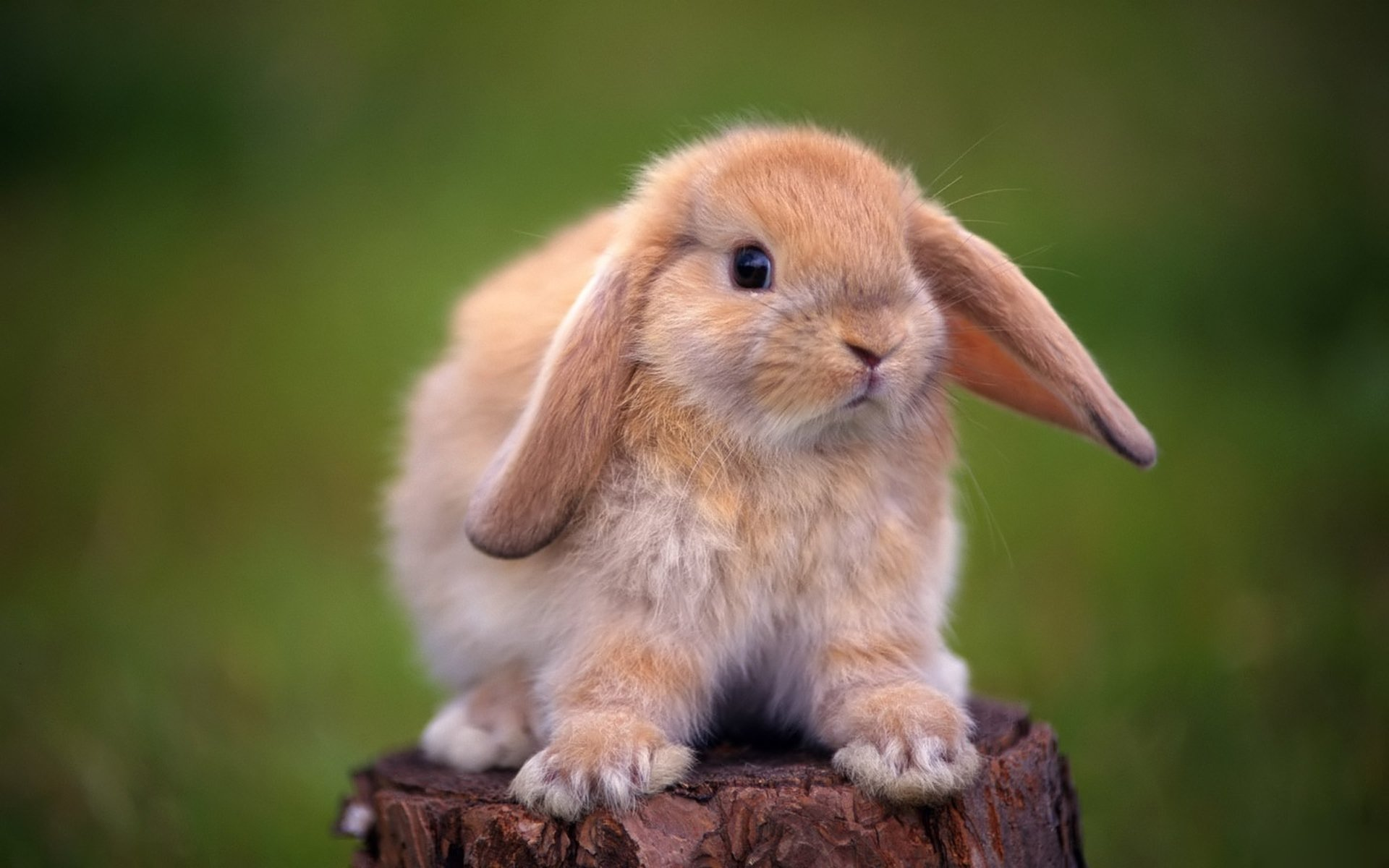 237 Rabbit HD Wallpapers | Backgrounds - Wallpaper Abyss