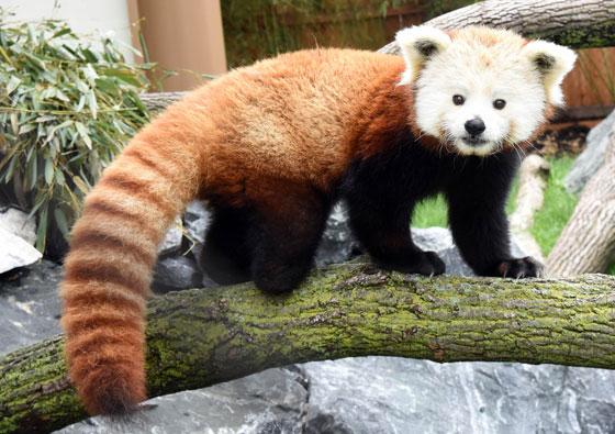 Chicago Zoological Society - Hamill Family Wild Encounters