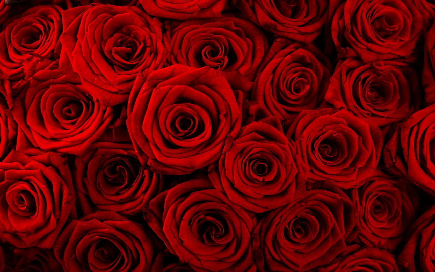 Red Rose Desktop Wallpaper Sf Wallpaper