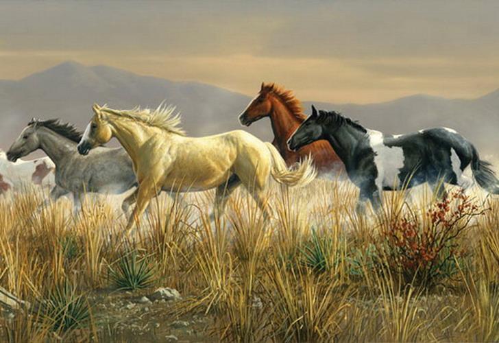 Riding horse wallpaper - SF Wallpaper