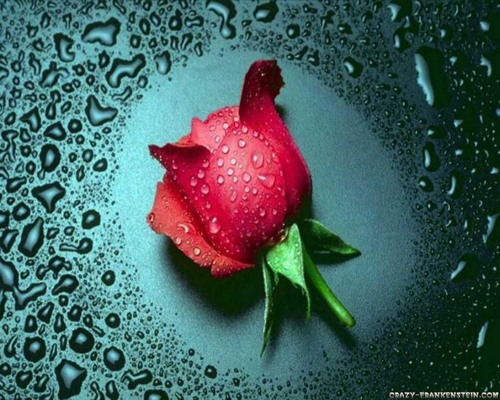 flower wallpaper Full Screen Wallpaper Flower Red