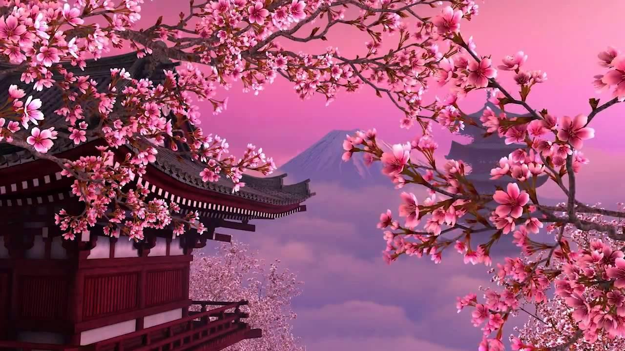 Sakura Wallpaper Sf Wallpaper