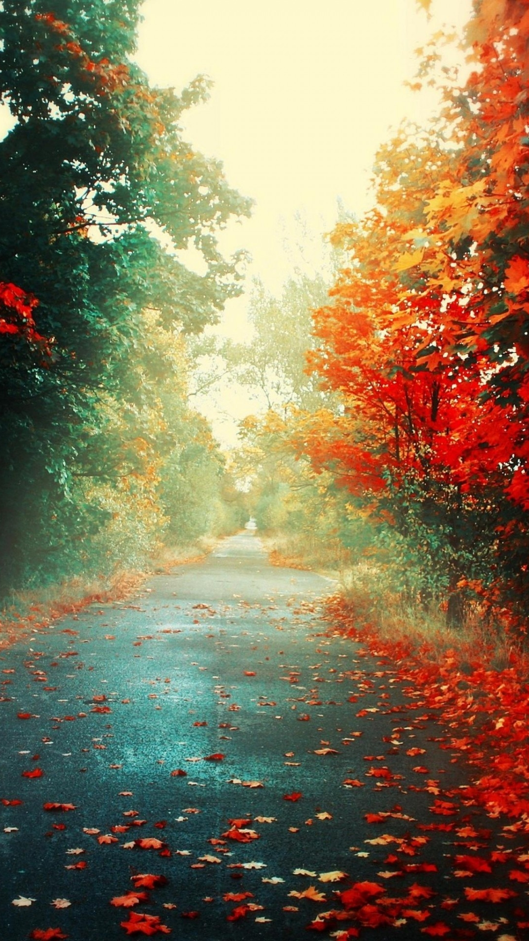 Autumn RoadSamsung Wallpaper Download | Free Samsung Wallpapers
