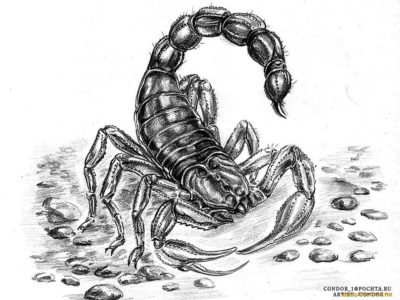 19 Scorpion HD Wallpapers
