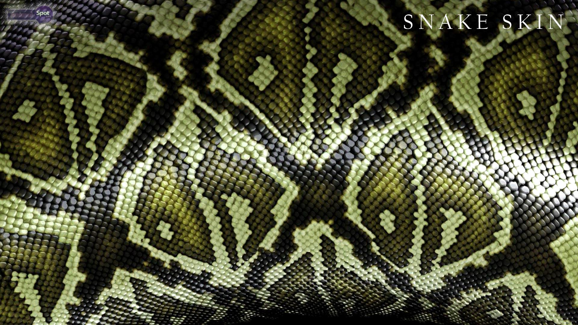 Snake Skin Wallpaper Sf Wallpaper