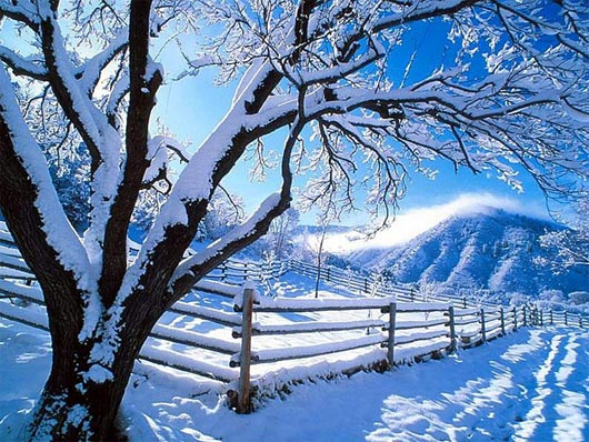 50 Beautiful Snowfall Season Wallpapers Warm Breath Feelings