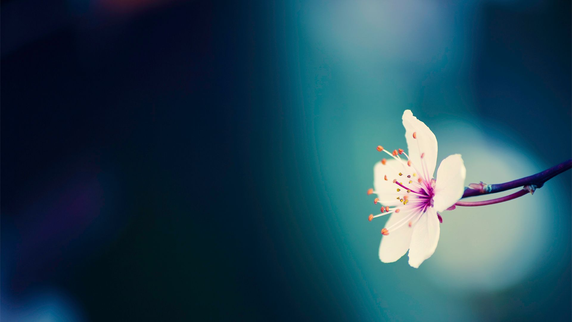 Spring Flower Background Sf Wallpaper