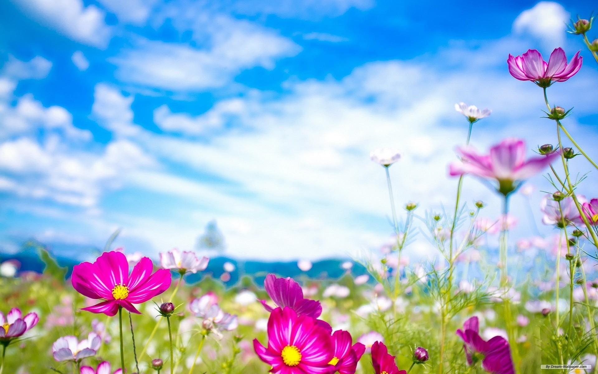 Spring Flower Background Sf Wallpaper