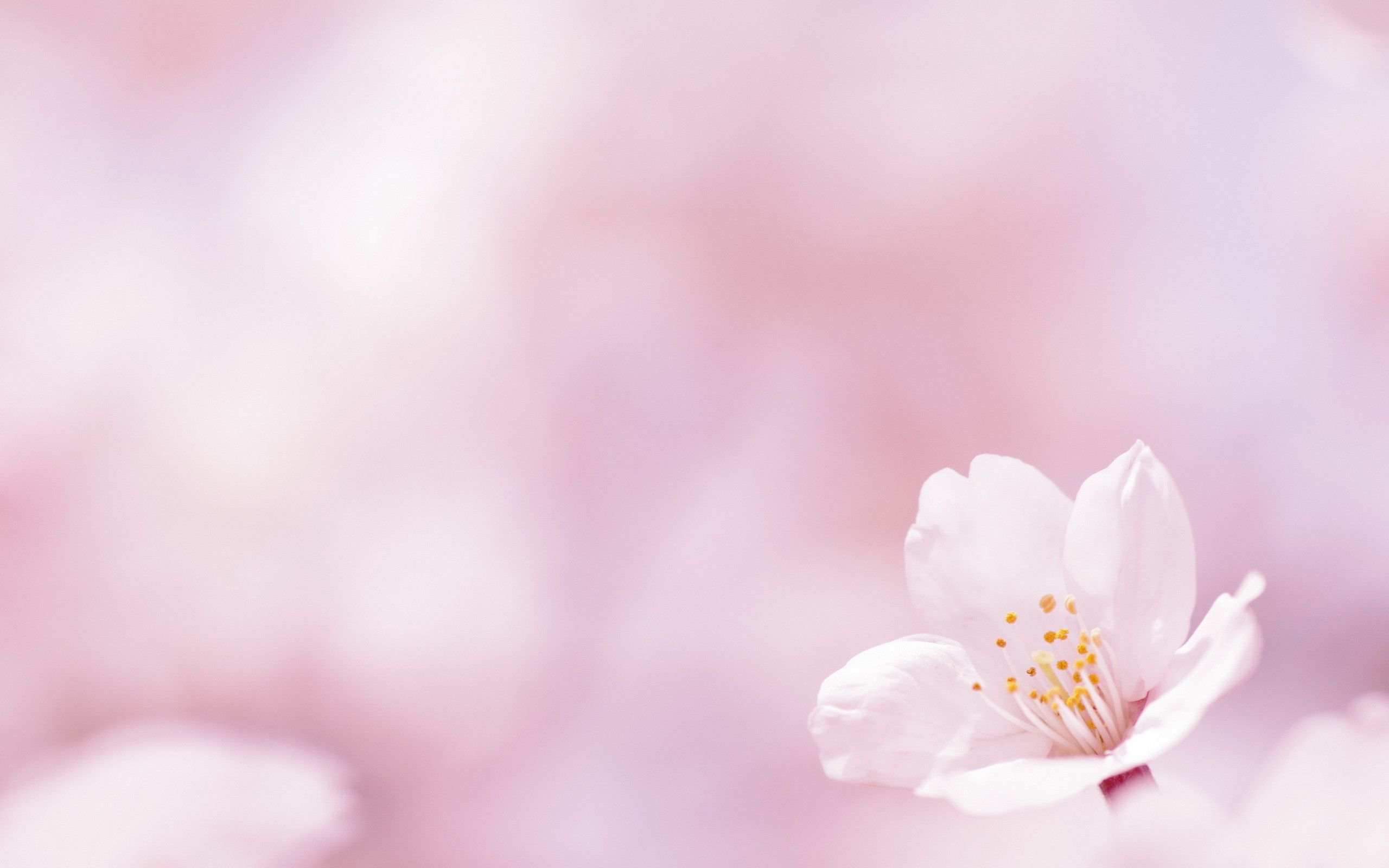 Spring flower background sf wallpaper spring flowers backgrounds desktop wallpaper cave mightylinksfo
