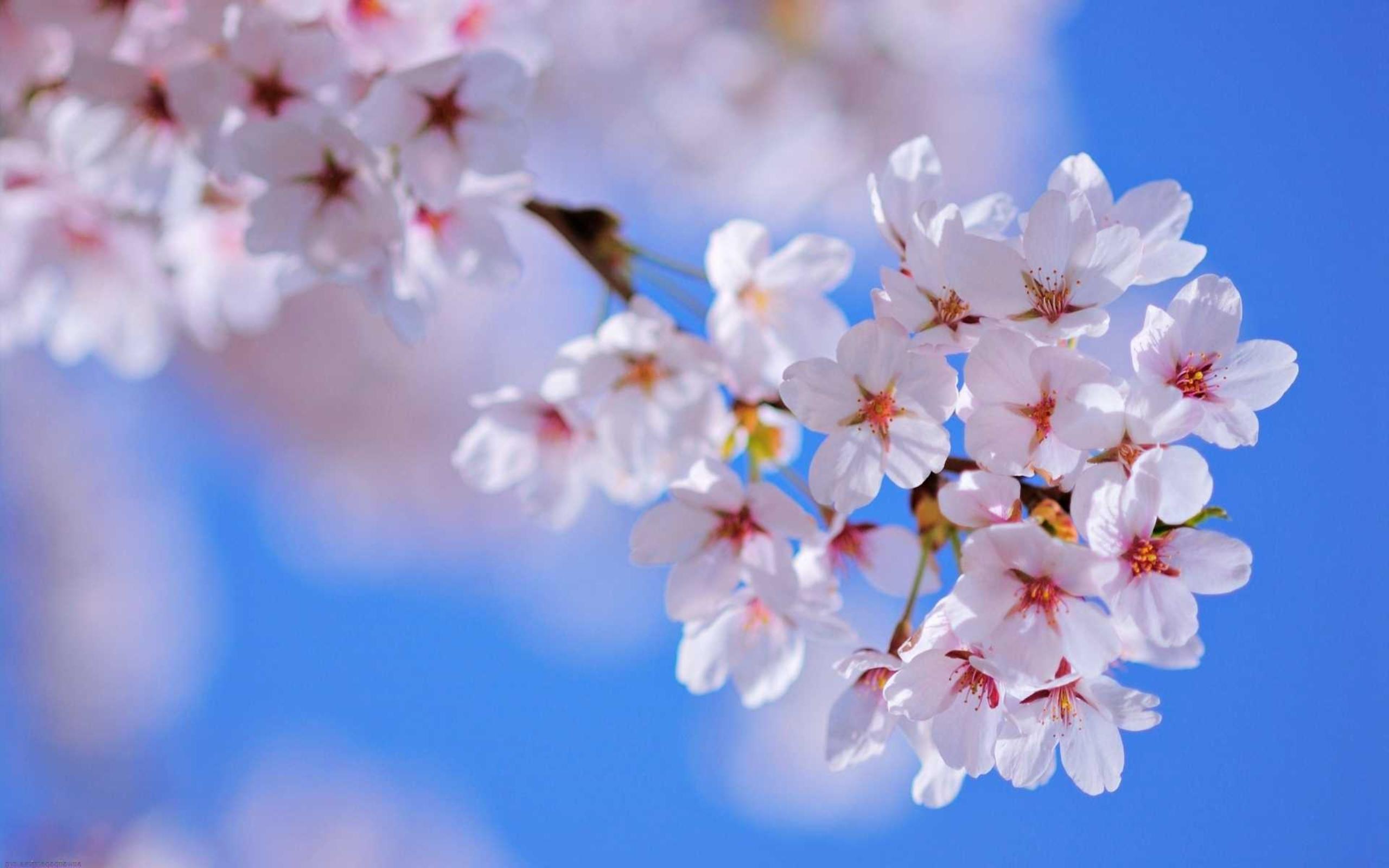 Spring Flowers Wallpaper Sf Wallpaper