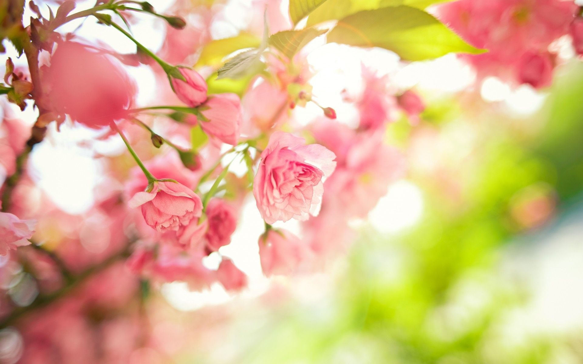 Spring Flowers Wallpaper Backgrounds Sf Wallpaper