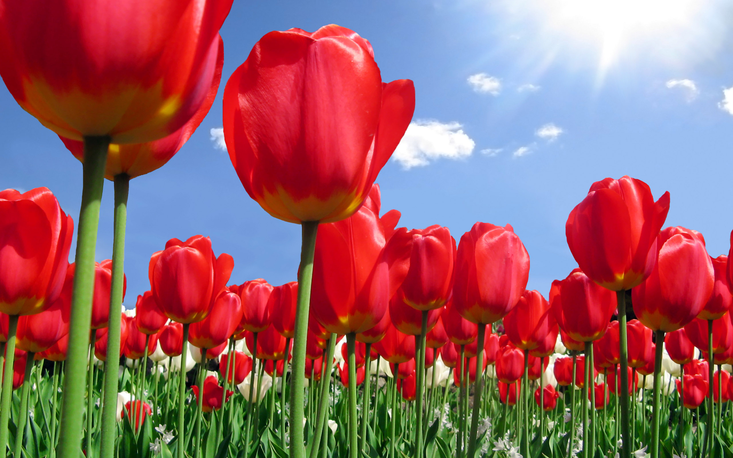 Spring flowers wallpaper backgrounds sf wallpaper spring background free download pixelstalk net mightylinksfo