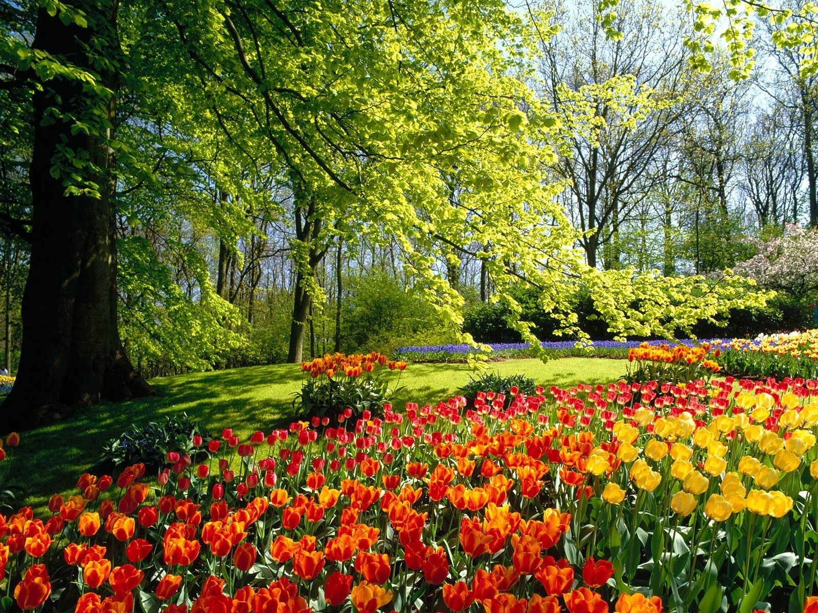Spring flowers wallpaper nature wallpapers for free download about