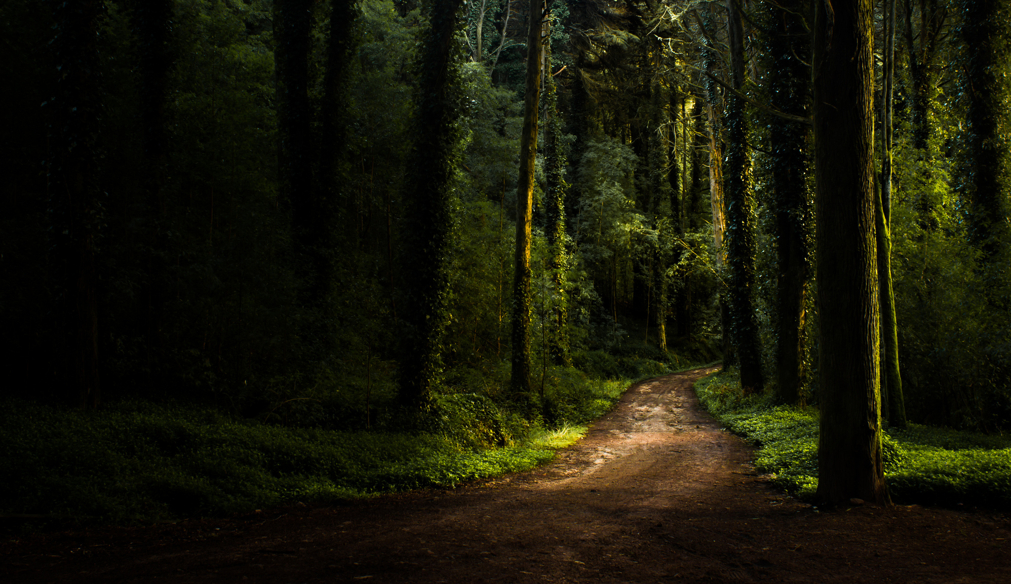 Cool Wallpaper High Quality Forest - summer-forest-wallpaper-10  You Should Have_82766.jpg