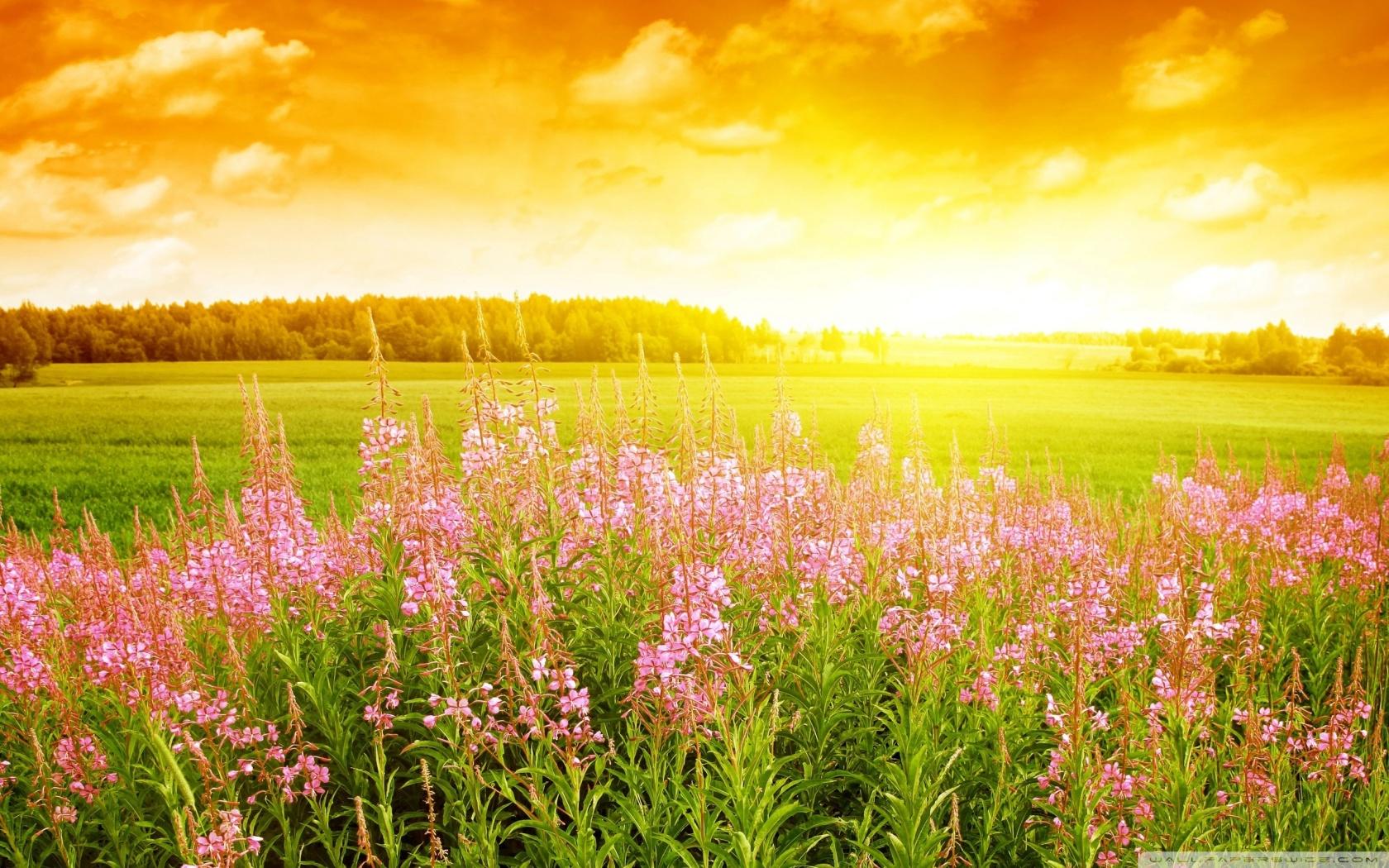 Summer Day HD desktop wallpaper : High Definition : Fullscreen