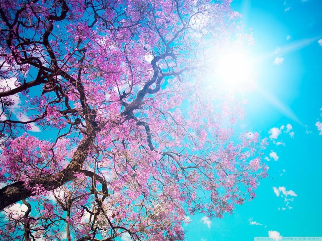 Spring Sunshine HD desktop wallpaper : High Definition