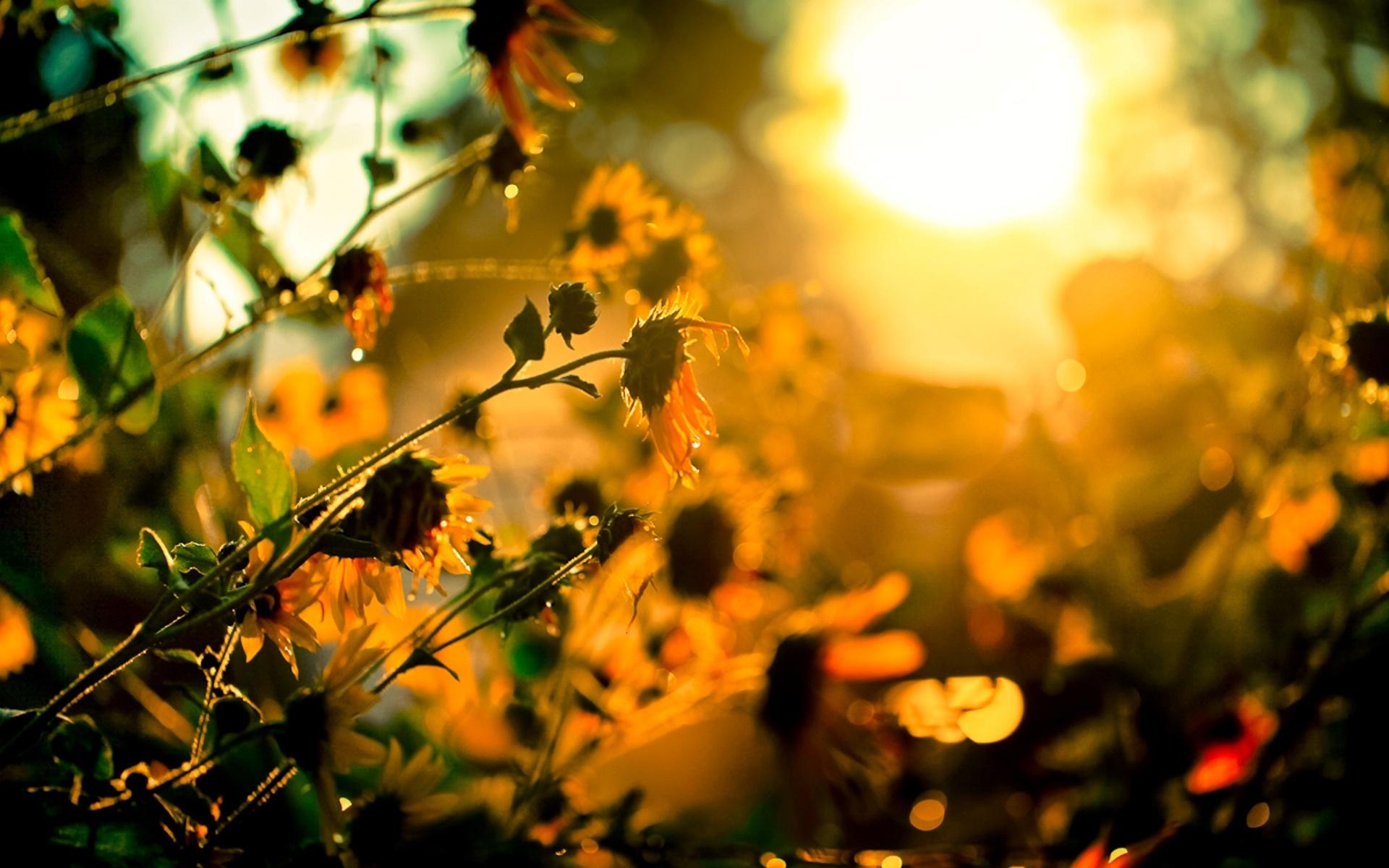 HD Sunshine Wallpaper #6871660