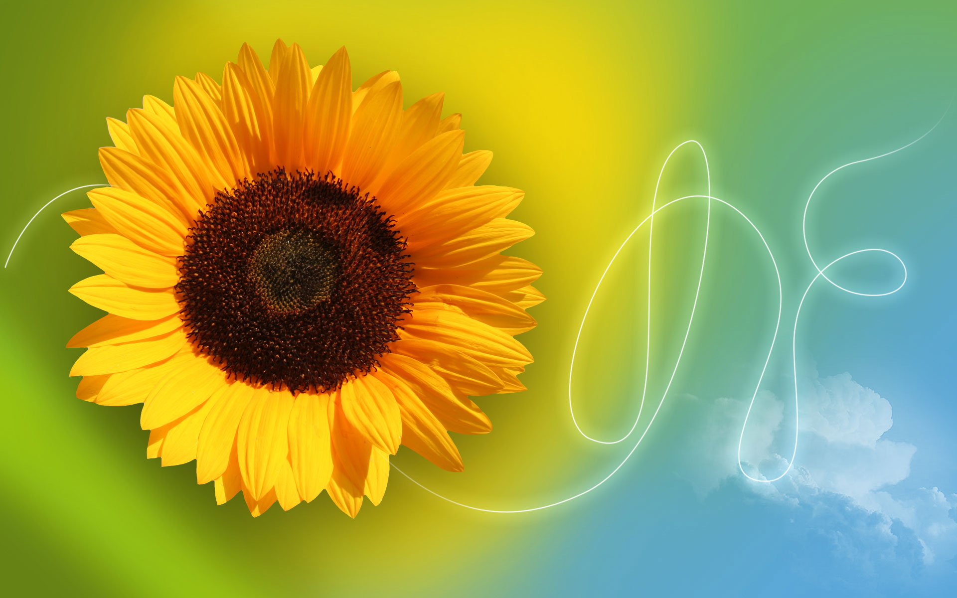 1280x863px Astounding Sunflower Background | #495616