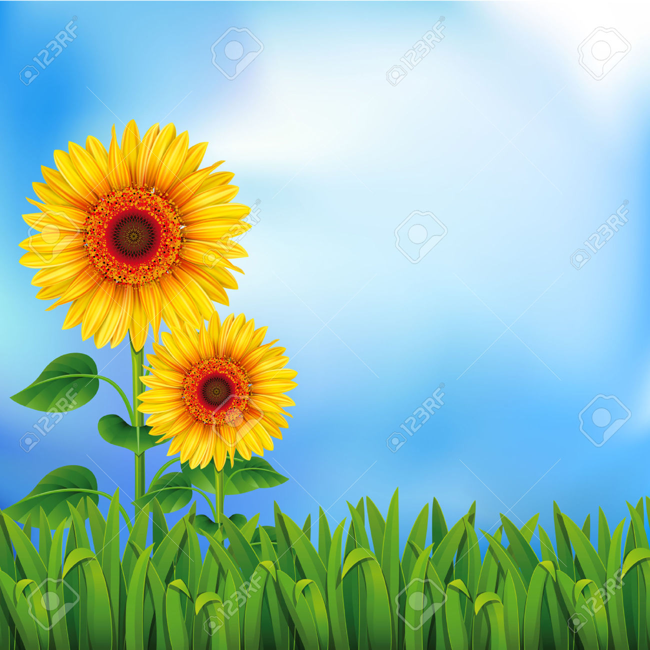 Sunflower clipart background - ClipartFest