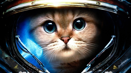 Commander Kitty - Other & Abstract Background Wallpapers on