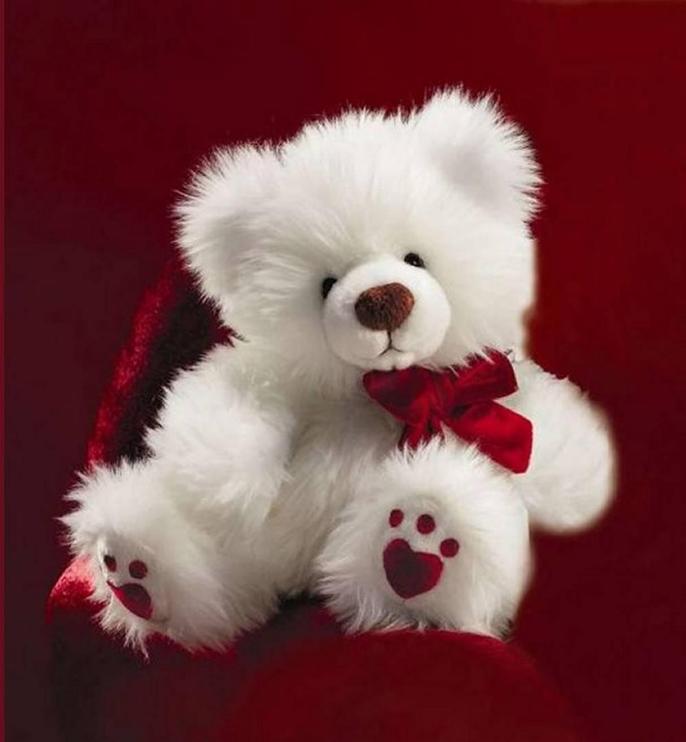 Teddy Bear Wallpapers Free Download Sf Wallpaper