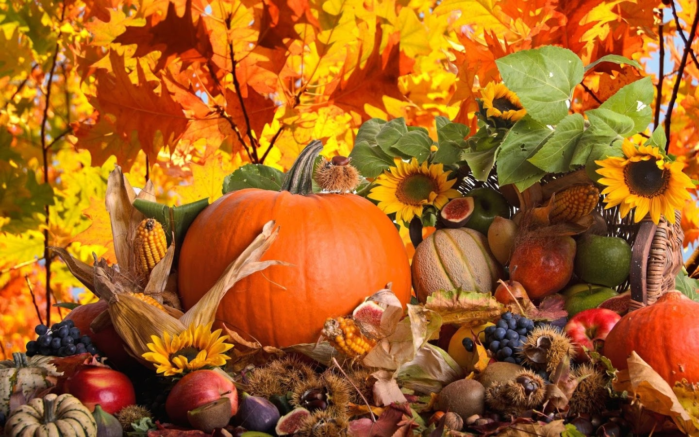 Thanksgiving Day Wallpaper - Android Apps on Google Play