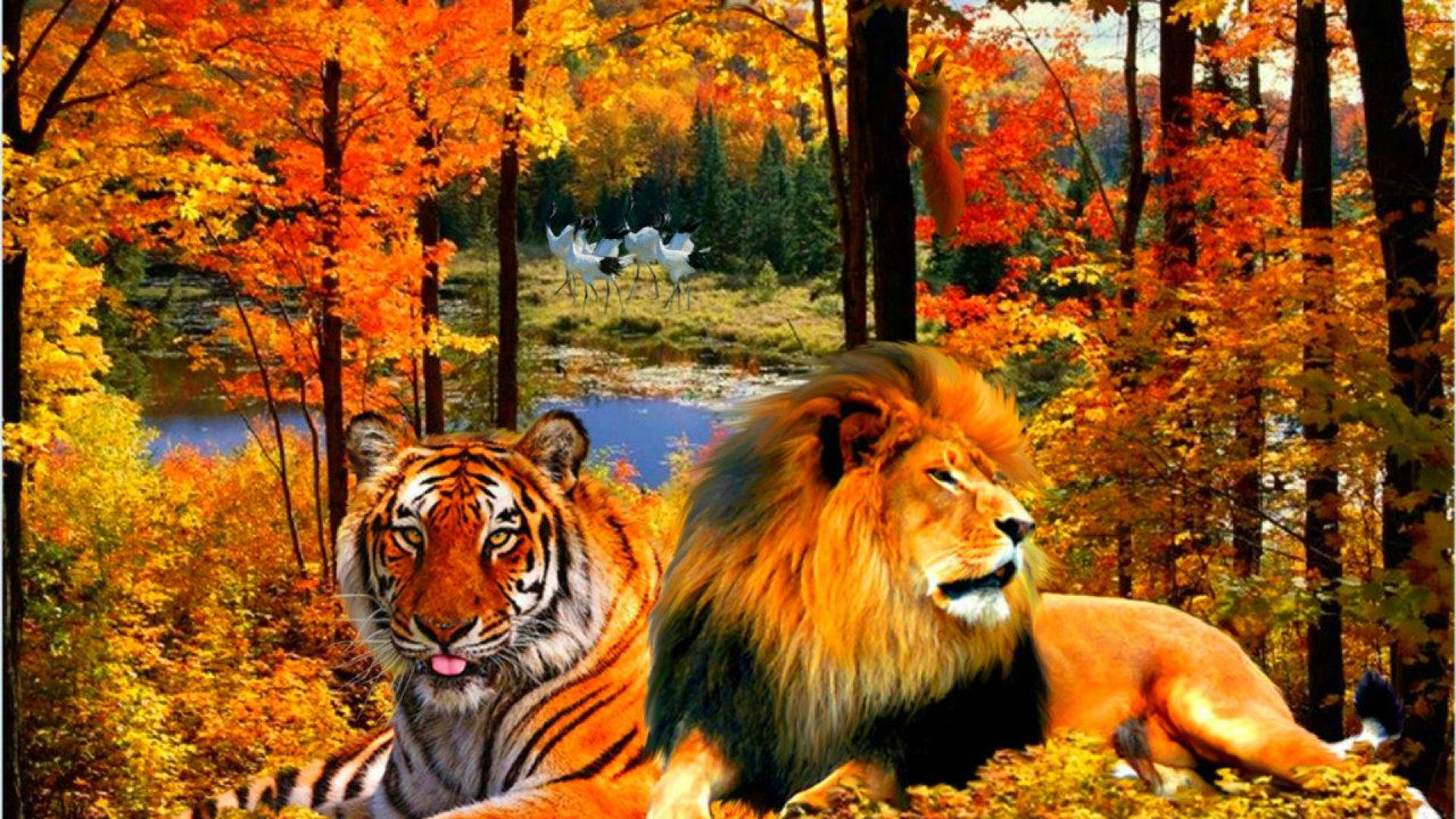 tiger and lion wallpaper #17