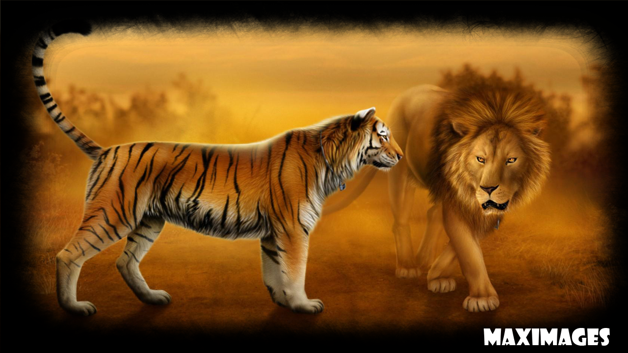 tiger and lion wallpaper #6