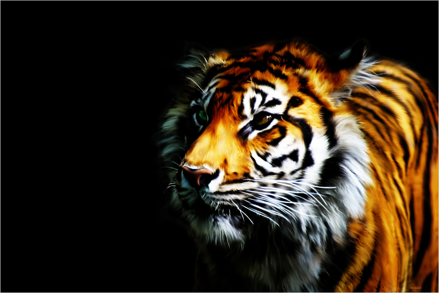 tiger backgrounds #13