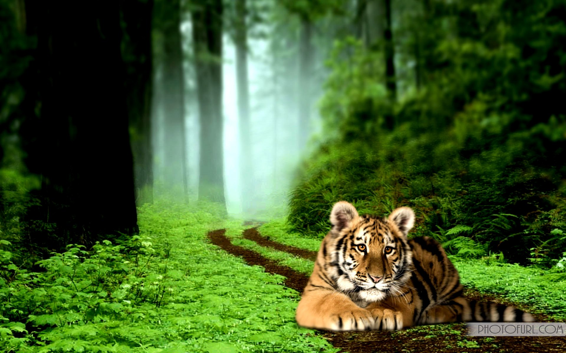 tiger background wallpaper #11
