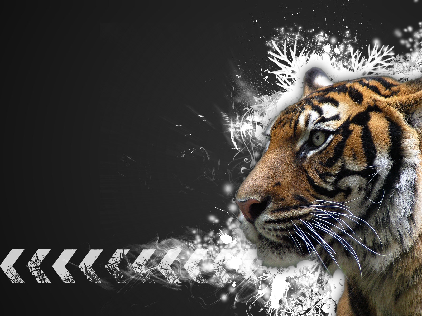 tiger background wallpaper #19