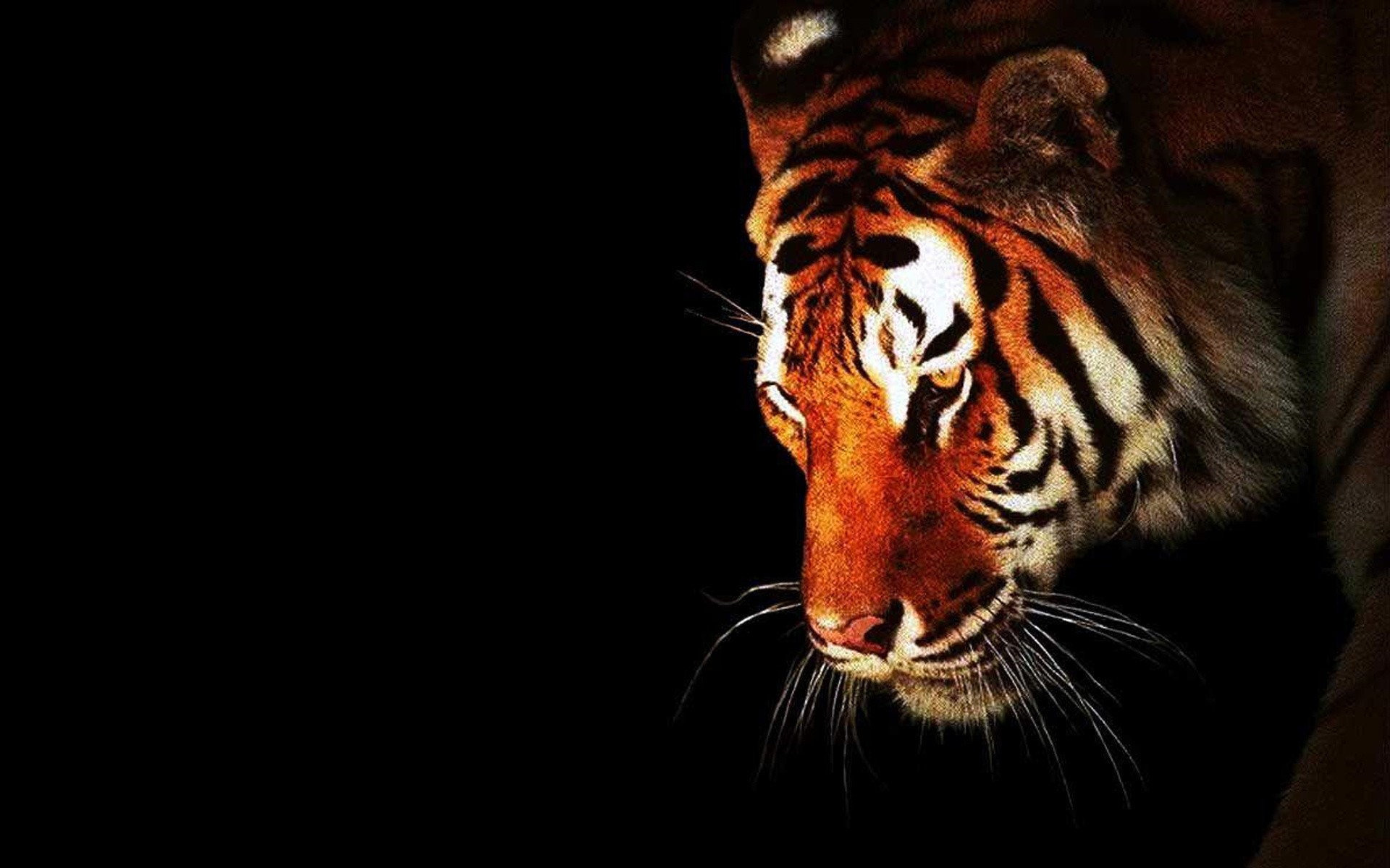 tiger background wallpaper #13