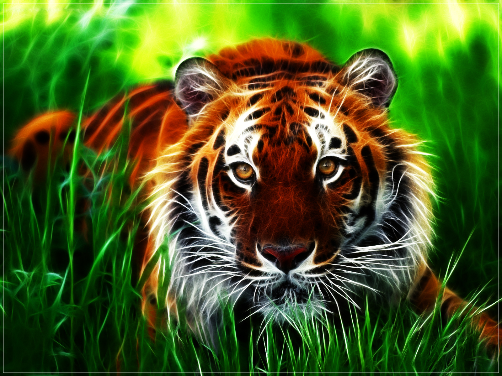 tiger backgrounds for computer #12