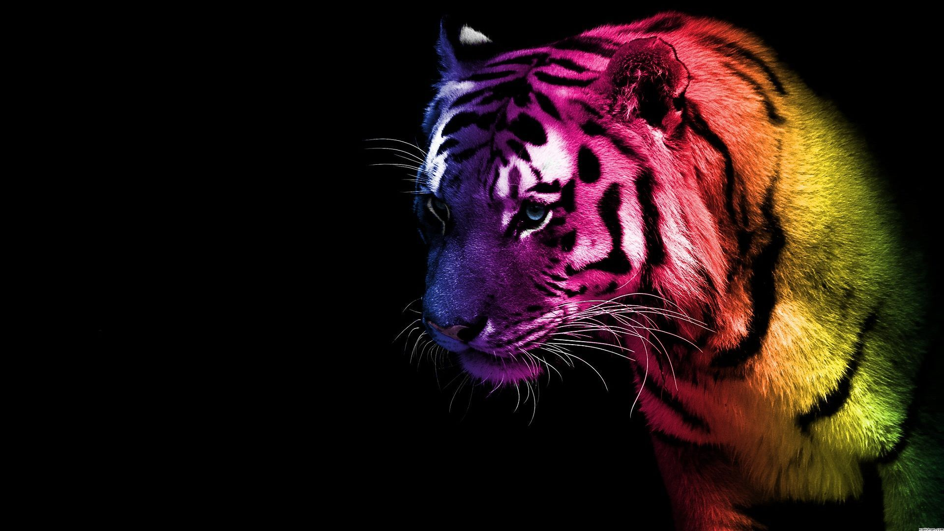 tiger backgrounds #16