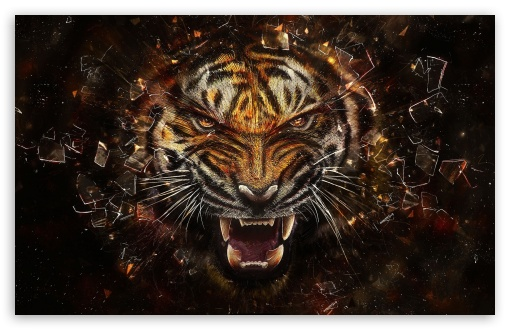 Tiger Backgrounds HD desktop wallpaper : Widescreen : High