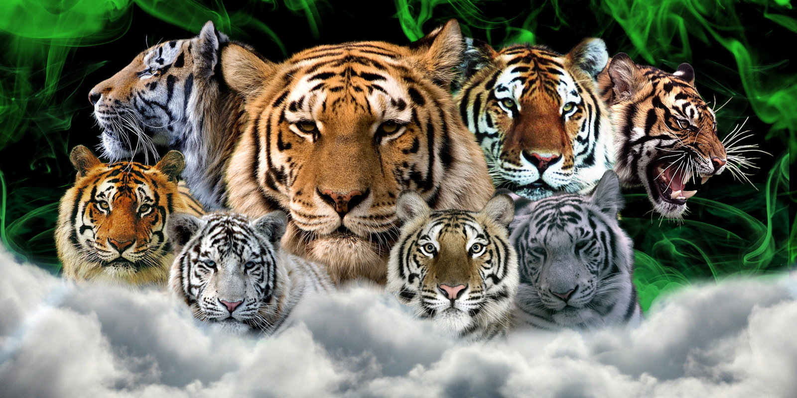 tiger backgrounds for computer #24