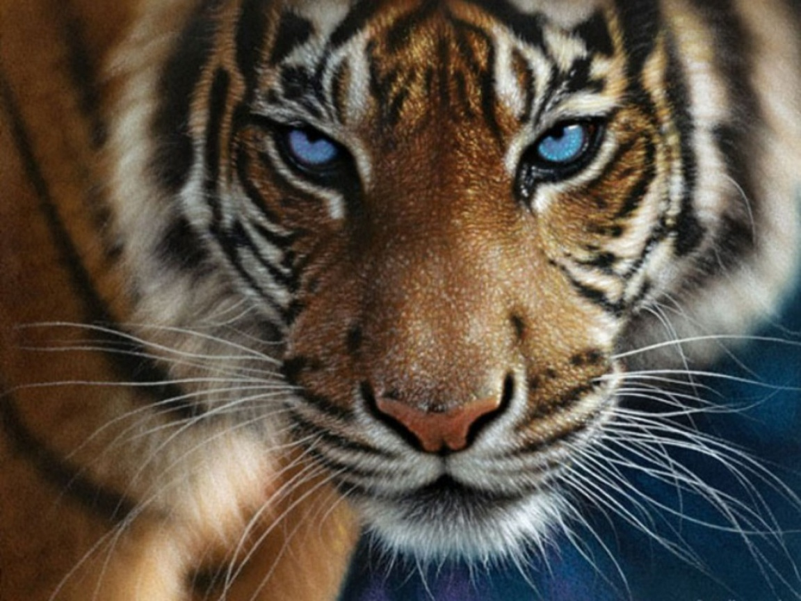 Tiger Eyes Wallpapers - WallpaperPulse