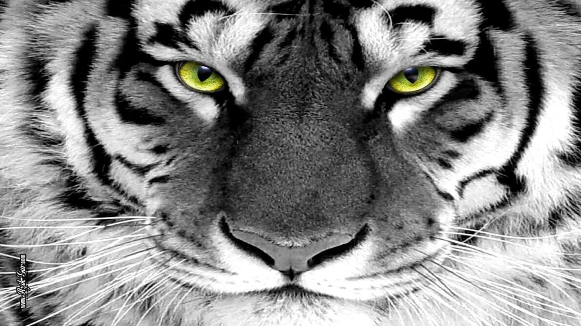 Green Tiger Wallpapers Group (70+)