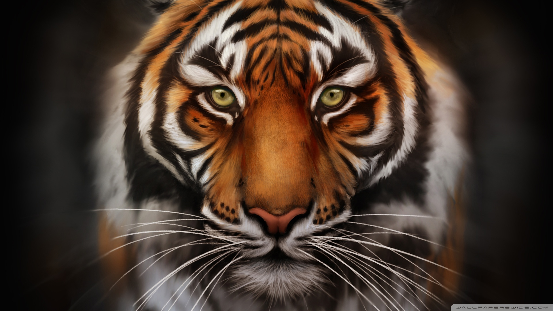 Tiger HD Wallpapers For Desktop Group (90+)