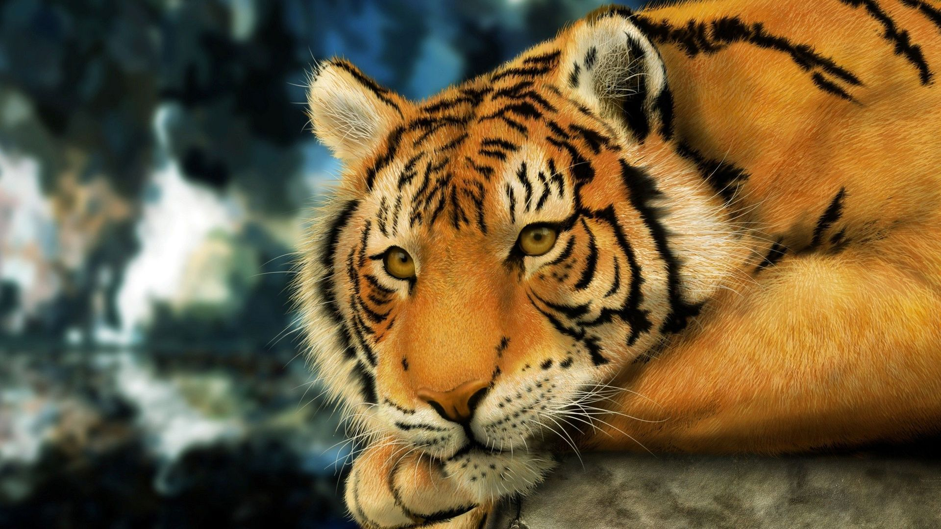 tiger-pictures-hd