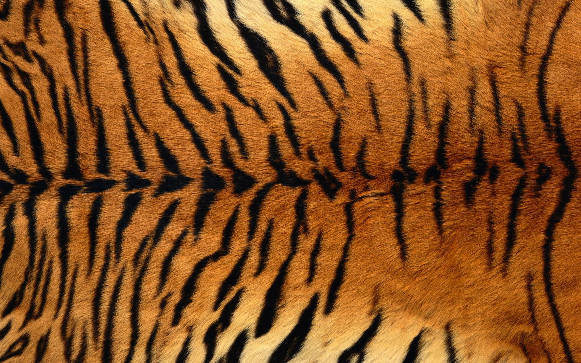 Tiger Print Wallpapers Group (47+)