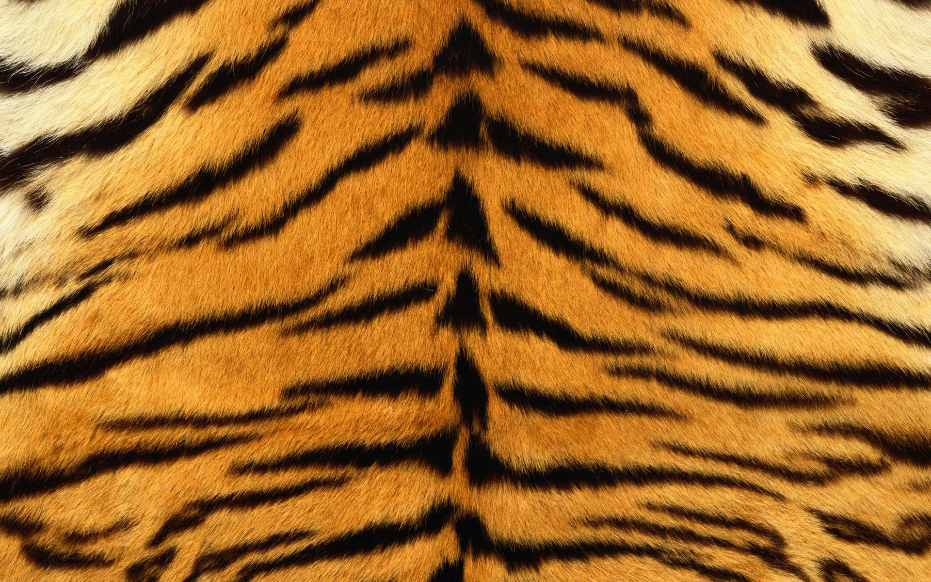 2 Tiger Print HD Wallpapers | Backgrounds - Wallpaper Abyss