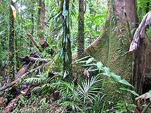 Tropical rainforest - Wikipedia