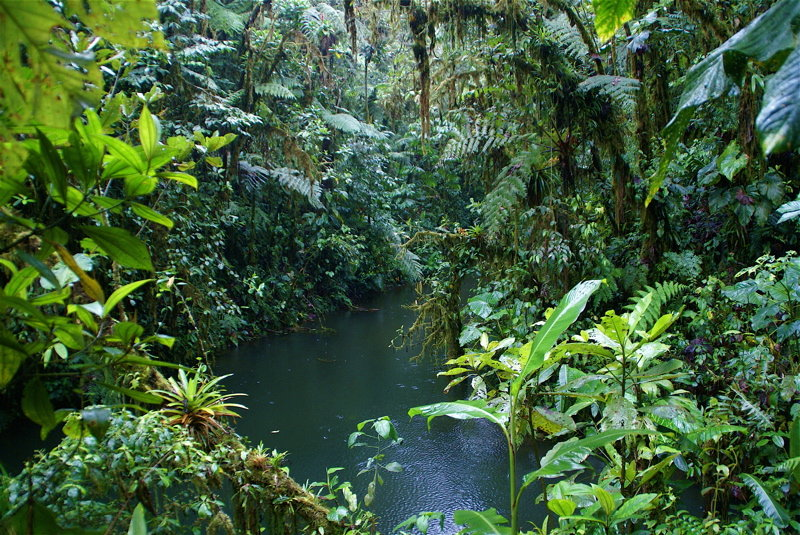 tropical forests | ConservationBytes com