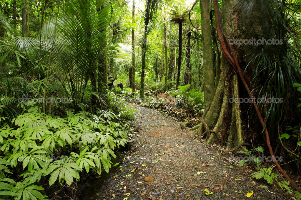 Tropical forest — Stock Photo © stillfx #4167863