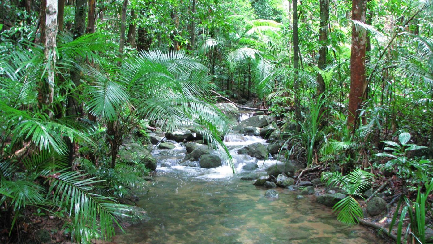 What are tropical rainforest landforms? | Reference com