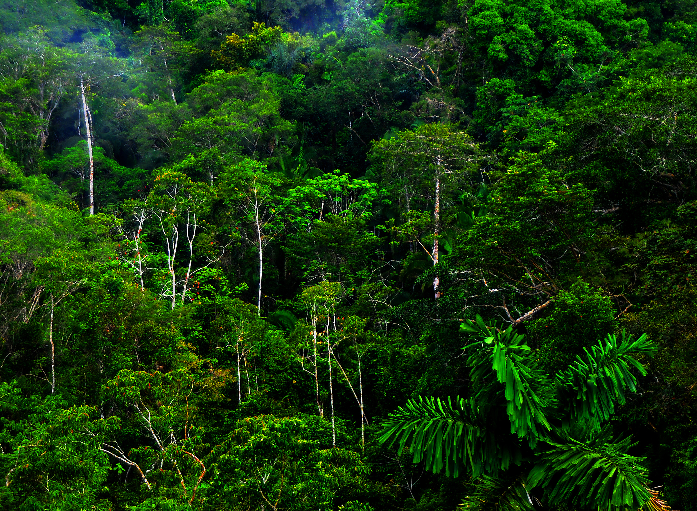 tropical rainforest: tropical rainforest | Glogster EDU
